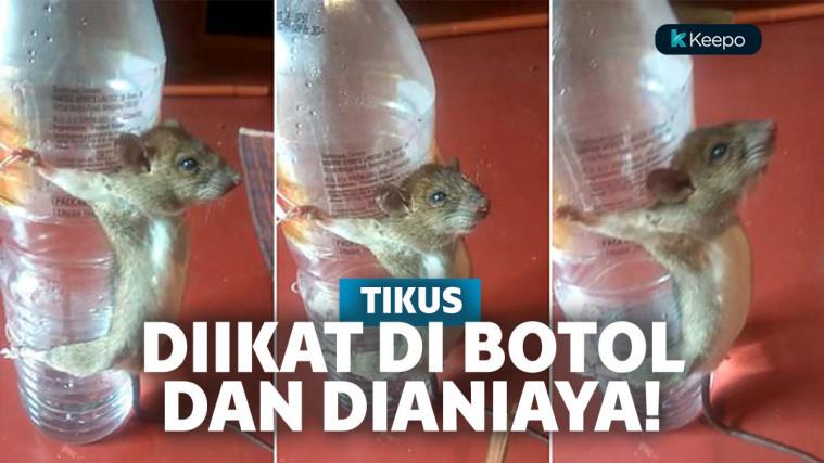 Dituduh Makan Kabel Charger, Tikus Ini Diikat di Botol dan Disiksa! | Keepo.me