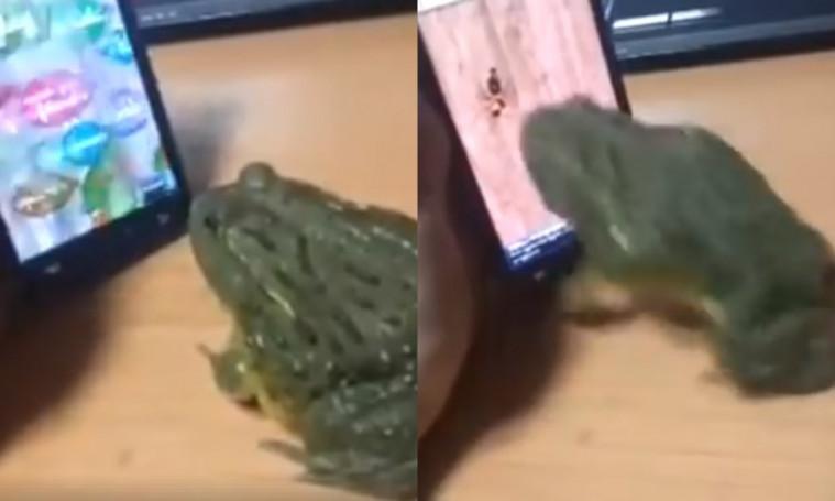Collab Dengan Kodok Buat Bantuin Main Game,  Ujungnya Malah Berakhir Malang! | Keepo.me
