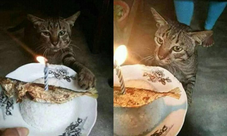 Kue Ulang Tahun Malah Diganti Nasi Dan Ikan Asin