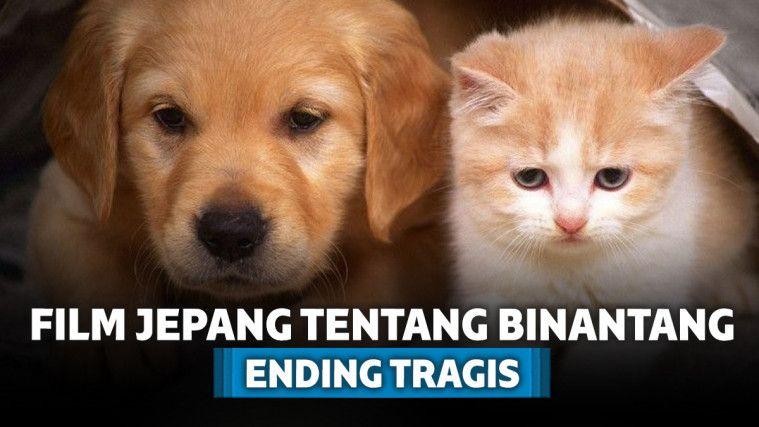 Unduh 101+  Gambar Animasi Kucing Sedih Paling Lucu
