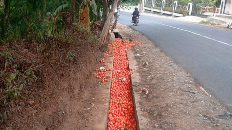 Petani Buang Tomatnya di Selokan Karena Dihargai Rp 200 per Kilo, Inilah Reaksi DPR | Keepo.me