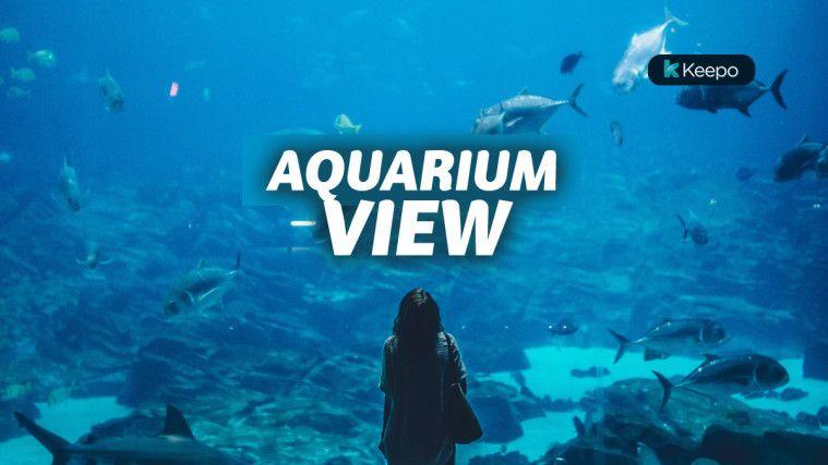 Wisata Aquarium Terbaik di Dunia yang Indah Tiada Tara