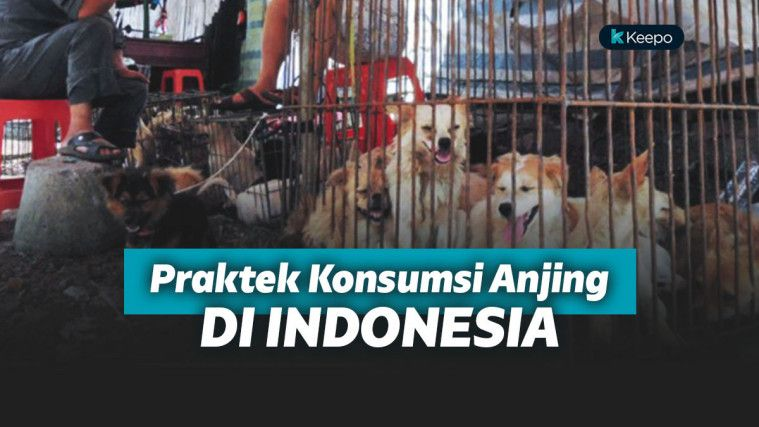 Karanganyar Akan Tutup Warung Kuliner Anjing, Langkah Tegas Akhiri Konsumsi Daging Anjing! | Keepo.me