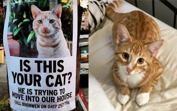 Unduh 80+  Gambar Kucing Tepar Paling Baru