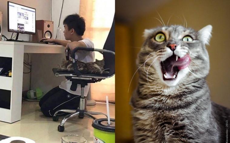 Kucing Kesayangan Duduk Di Kursinya, Pria Ini Rela Jongkok! Netizen: Dasar Budak! | Keepo.me