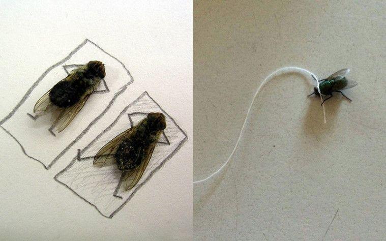 Menjijikkan! Pria Ini Ketagihan Pelihara Lalat yang Dikenal Suka Nyebarin Penyakit! | Keepo.me