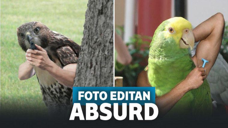 48 Gambar Binatang Lucu Bikin Ngakak Terbaik