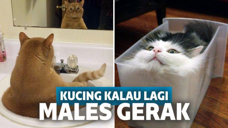 Download 87+  Gambar Kucing Gerak Paling Bagus Gratis
