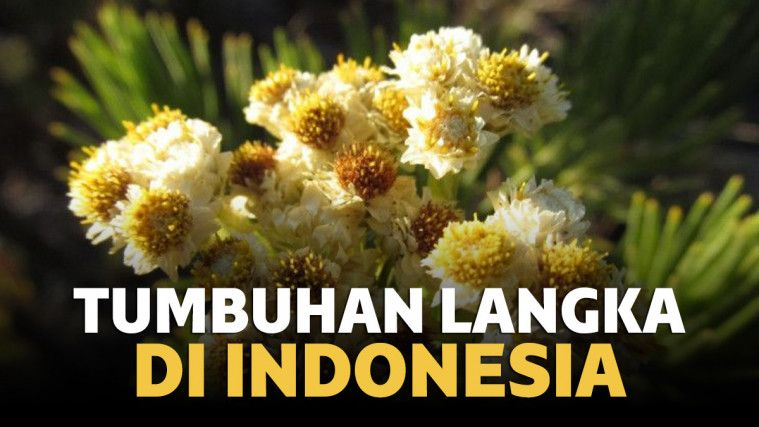 12 Tumbuhan Langka Di Indonesia Yang Terancam Punah
