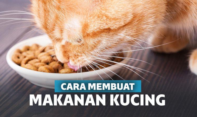 9 Cara Membuat Makanan Kucing Murah Bikin Gemuk Dan Sehat