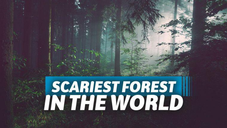 Hutan Terhoror di Dunia yang Disukai Penantang Uji Nyali