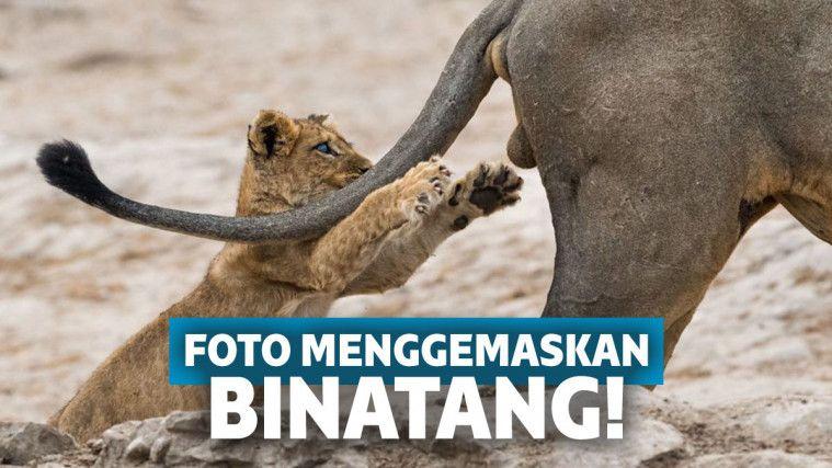Gemas! 14 Binatang Ini Memiliki Ekspresi Natural Saat Difoto