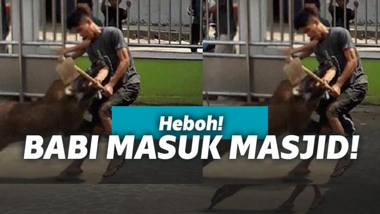 Viral Babi Masuk Masjid, Emak-emak Pengajian Teriak Astagfirullah! | Keepo.me