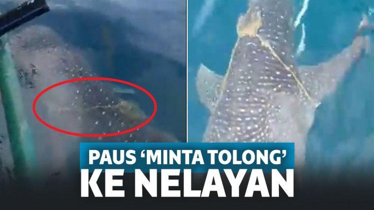 Badan Terjerat Tali, Paus Ini Seakan Minta Tolong ke Nelayan. Ini yang Terjadi Setelahnya! | Keepo.me