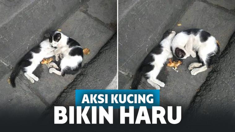 Terharu! Kucing Ini Bawakan Makanan untuk Saudaranya yang Kelaparan, Ternyata Sudah Mati | Keepo.me