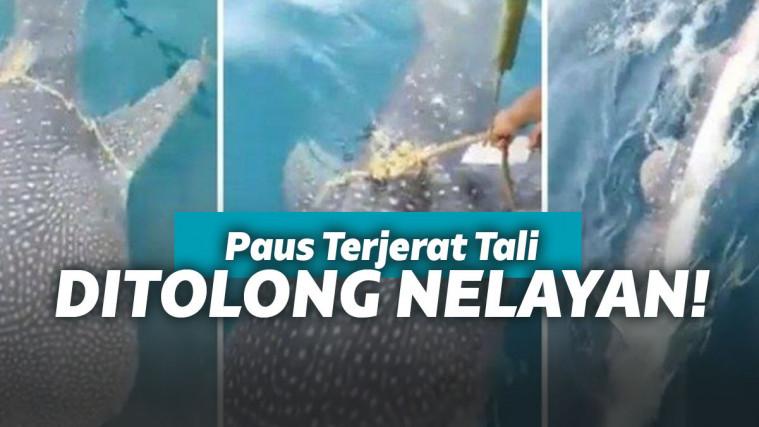 Terjerat Tali, Seekor Paus Datangi Kelompok Nelayan Seakan Minta Pertolongan! | Keepo.me