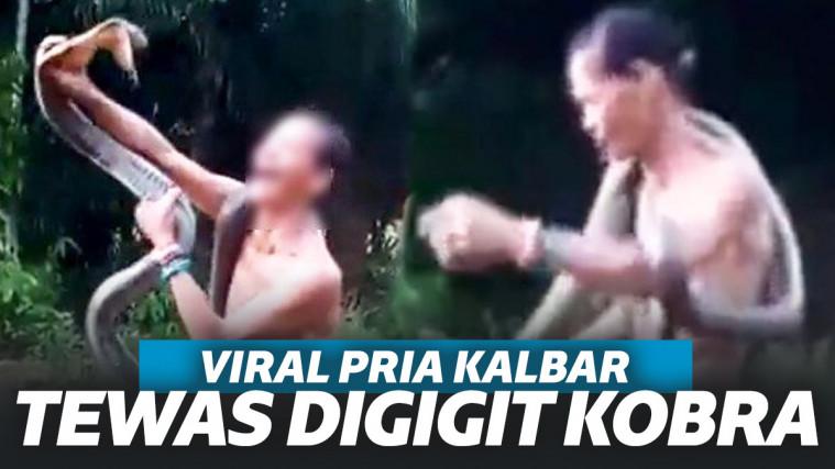 Nekat Mainkan King Kobra dan Tertawa Saat Digigit, Pria Kalimantan Ini Akhirnya Tewas! | Keepo.me