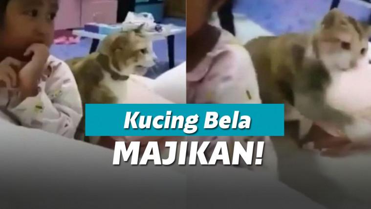 Cuma Akting Marah-Marah, Kucing Ini Pasang Badan Tak Terima Majikannya Dipukulin | Keepo.me