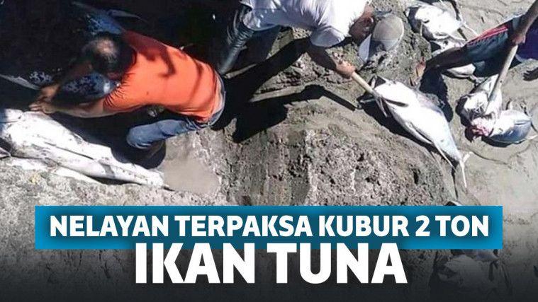 Viral Nelayan di Morotai Kubur 2 Ton Ikan Tuna Hasil Tangkapan, Ternyata Faktanya Pilu! | Keepo.me