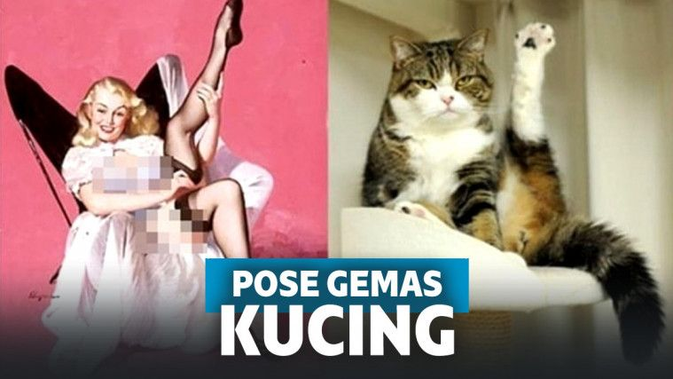 11 Pose Kucing Bergaya Ala Model Ini Bikin Ngakak Gemas