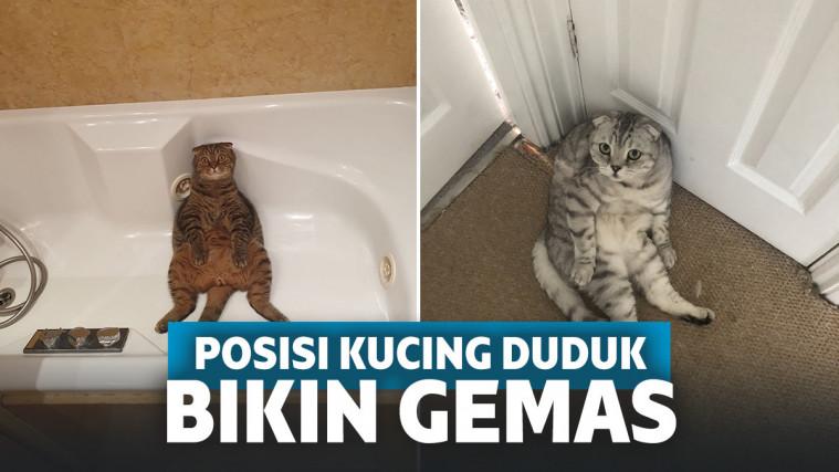 Terlihat Chill, Posisi Duduk 13 Kucing Ini Bikin Tertawa Gemas! | Keepo.me