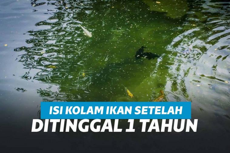 Ditinggal 1 Tahun, Isi Kolam Ini Bikin Kaget Pemiliknya! | Keepo.me