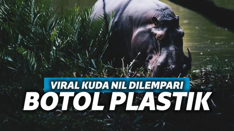 Viral Video Kuda Nil Dilempar Botol Plastik, Netizen: Manusia Bejat! | Keepo.me