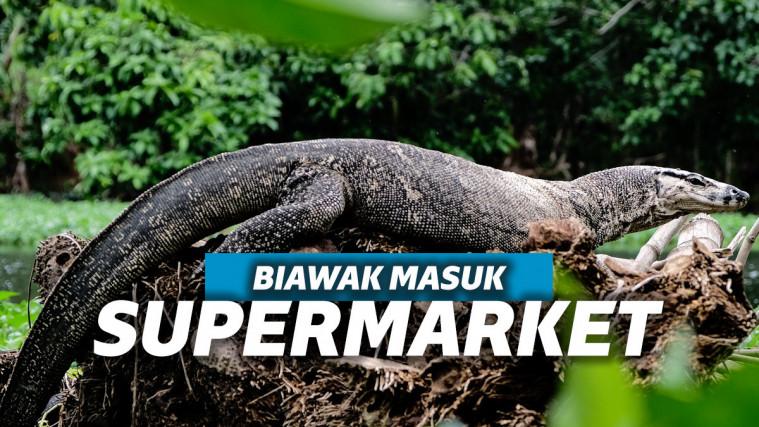 Viral! Biawak Raksasa Masuk ke Supermarket Geledah Rak Susu