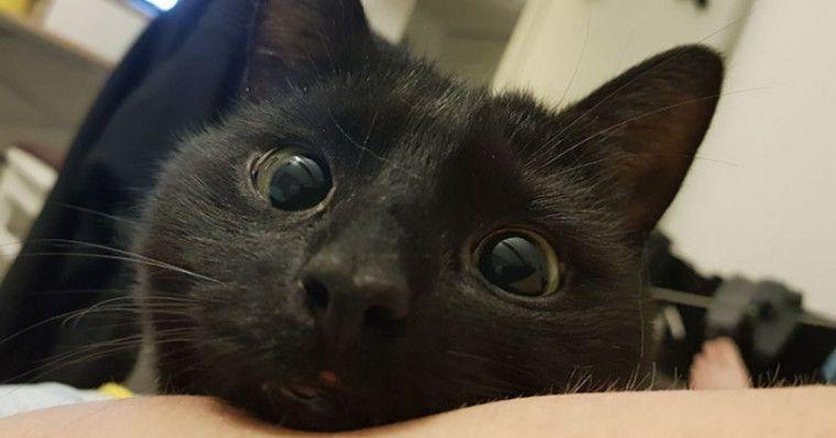 Download 95+  Gambar Kucing Yang Lucu Banget Paling Imut