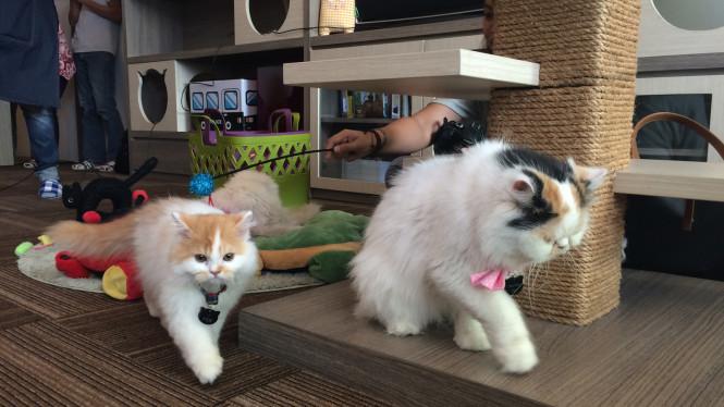 kafe kucing di indonesia