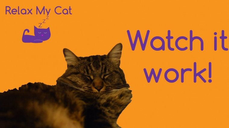 aplikasi <a href='https://uzone.id/tag/kucing' alt='kucing' title='kucing'>kucing</a> dan anjing