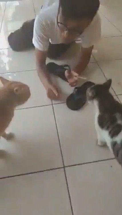Gambar Kucing Dan Anjing Berkelahi - 81021+ Nama Untuk ...