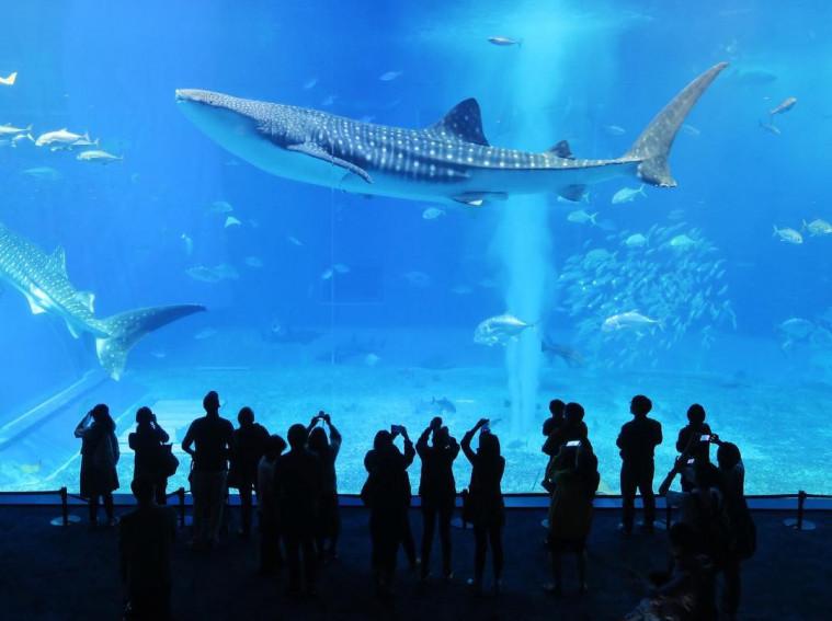 wisata aquarium terbaik