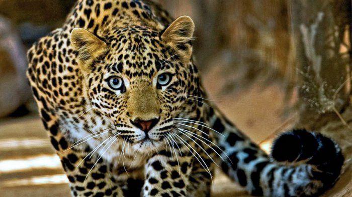 5500 Koleksi Gambar Hewan Yang Langka Di Indonesia Terbaik