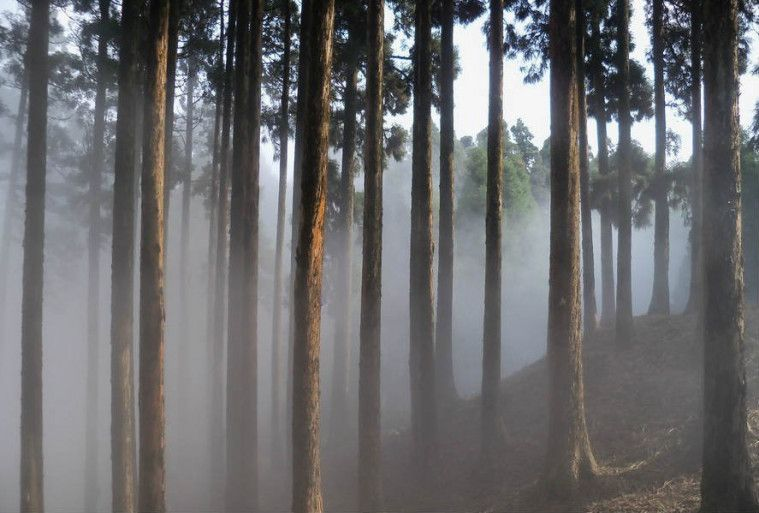 hutan terseram di dunia