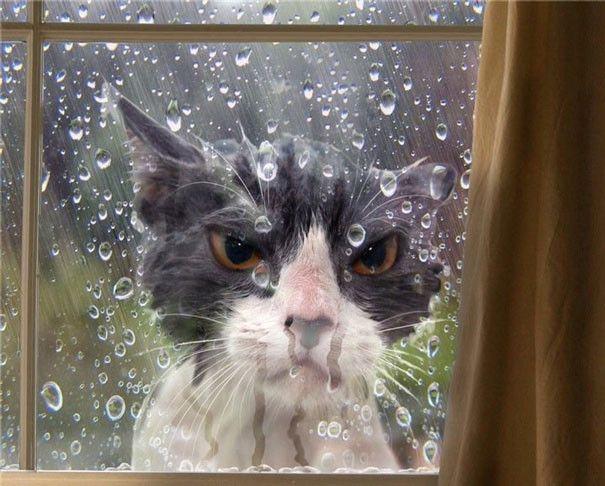15 Foto Kekonyolan Kucing Ini Bikin Ngakak