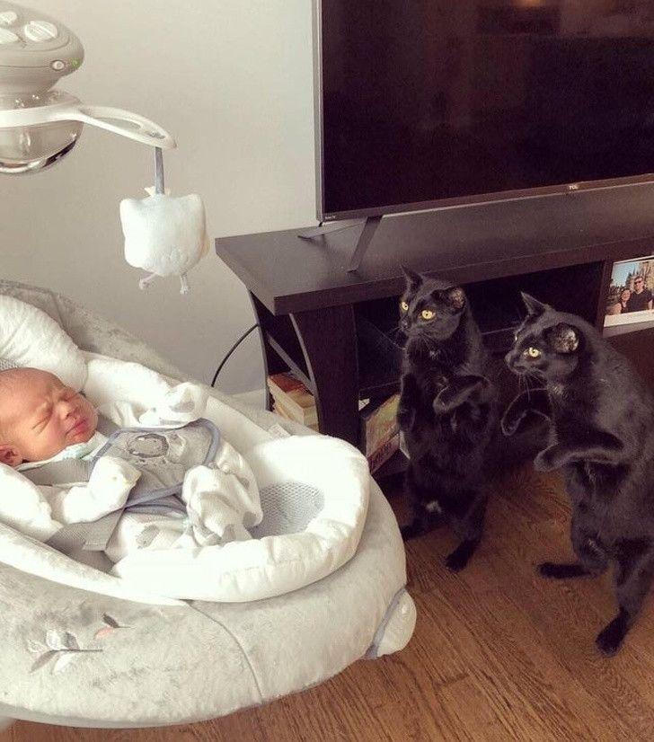 13 Bukti Manusia Gak Akan Bisa Paham Pikiran Kucing