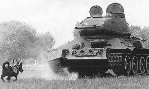 Foto Perang Dunia II